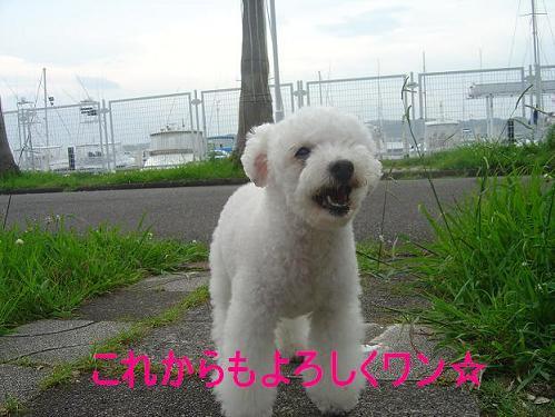 コピー ~ DSC01357.JPG